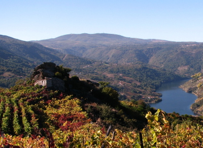 a short stroll from Casa dos Artesans brings you to this view over the River Sil Canyon and vineyards