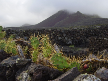 volcanic landscape with cactus on lanzarote