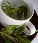 natural lemon verbena tisane