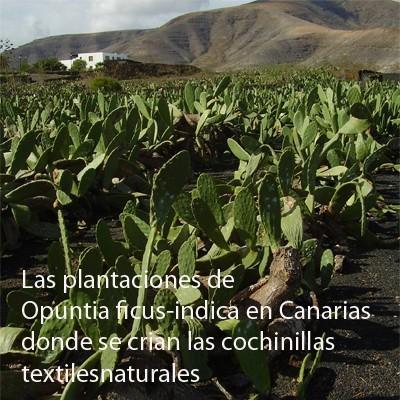 plantaciones 400pix